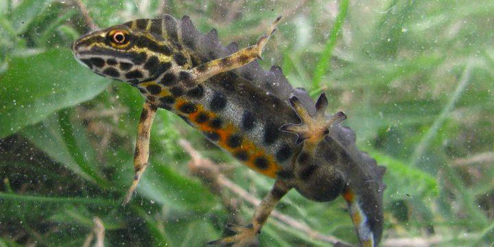 Miscari caracteristice unor specii de animale din situl Cheile Doftanei