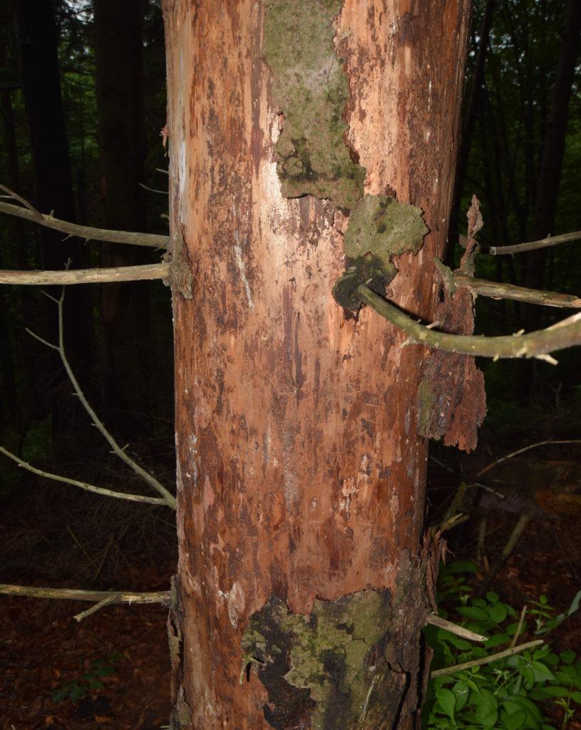 lemn mort, lemn putred
