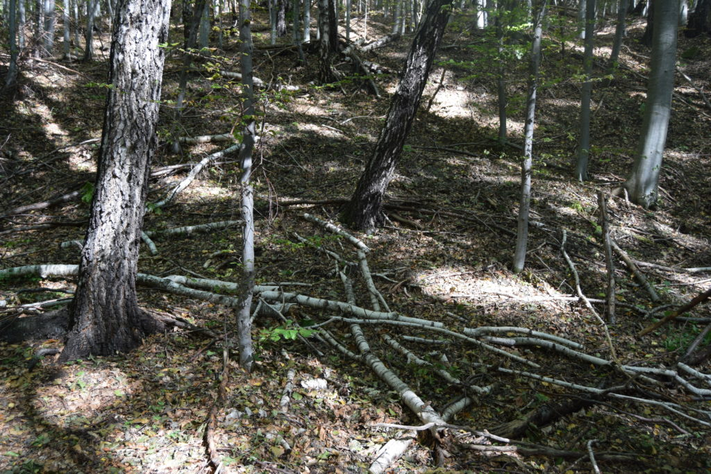 lemn mort
