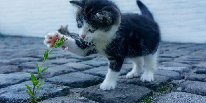 Cum sa ne ferim pisica de accidente casnice