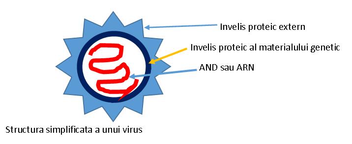 Virusii sunt numiți paraziți obligatorii